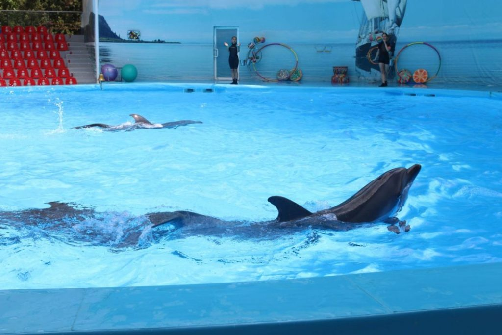 дельфинарий крым алушта